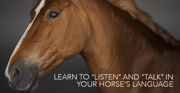 HorsesinTranslation-web-horseandriderbooks