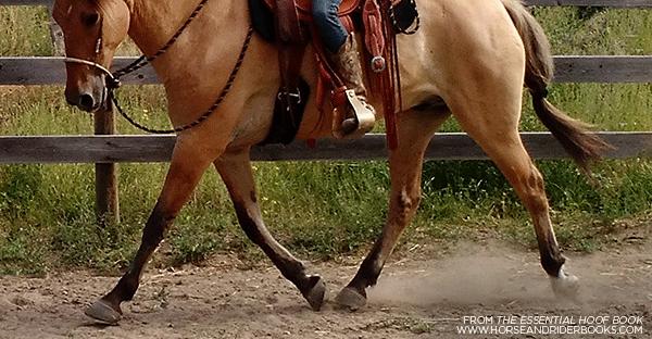 TheEssentialHoofBook-horseandriderbooks