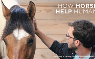 How Horses Help Humans Equine-Partnered Therapy