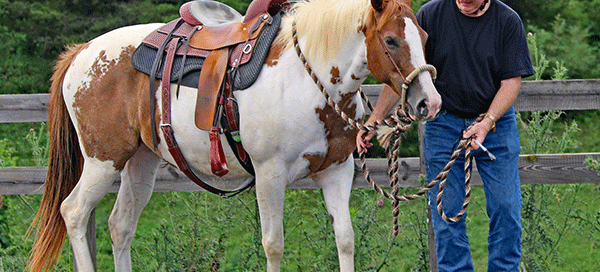 pinto horse with veteran The Horse Cure