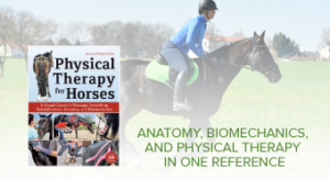 Horse and rider trotting in field Physical Therapy for Horses