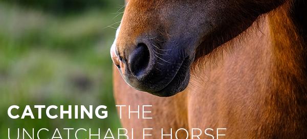 the uncatchable horse