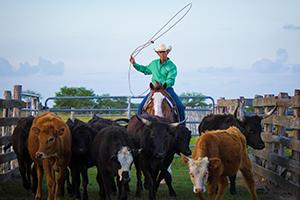 Van Hargis horseman herding cattle