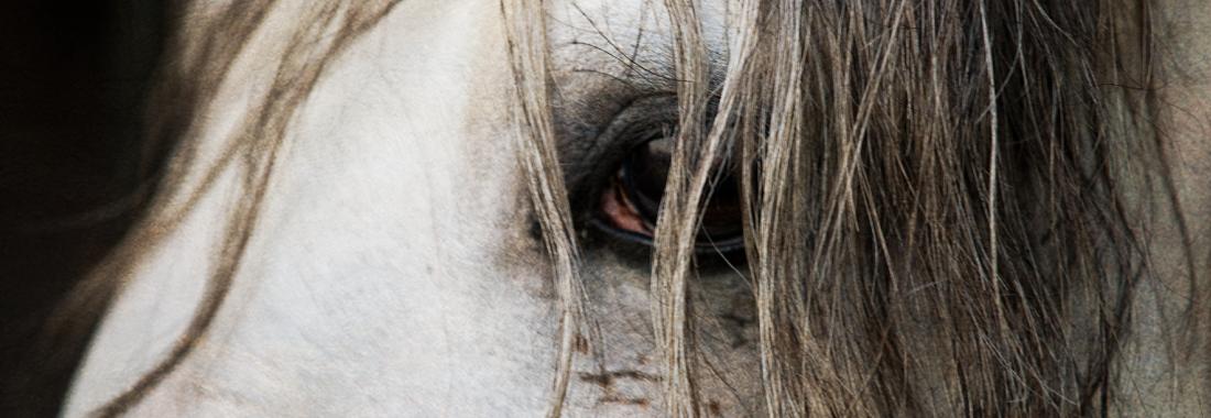 TrafSite_SliderTemplate-KeronPsillas-horseandriderbooks