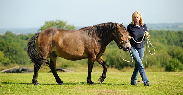 HorseAgilityTip-horseandriderbook