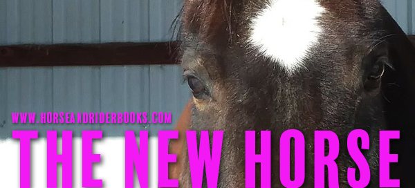 bay horse with star new horse